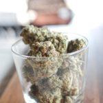 customer of legal cannabis